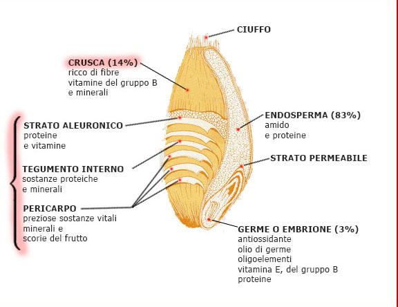 sezione_chicco1